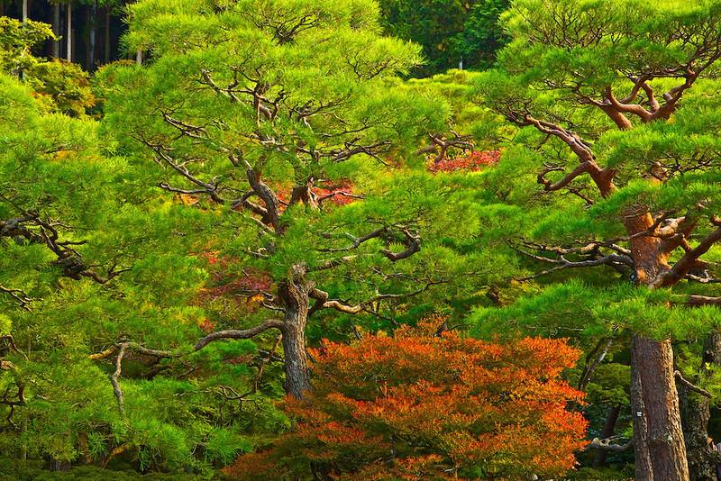 autumn slowly coming
