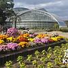 Chrysanthemums at the Kyoto Botanical Gardens