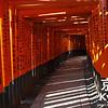 Torii Tunnel at Fushimi-Inari-taisha
