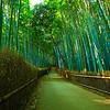 Arashima Bamboo forest