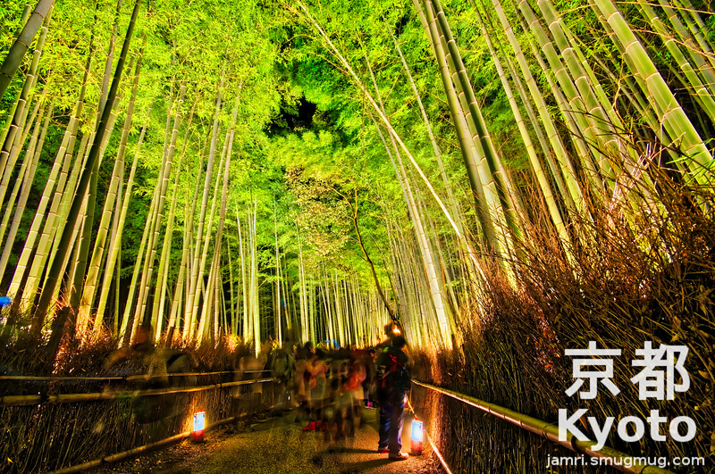 In the Bamboo Tunnel