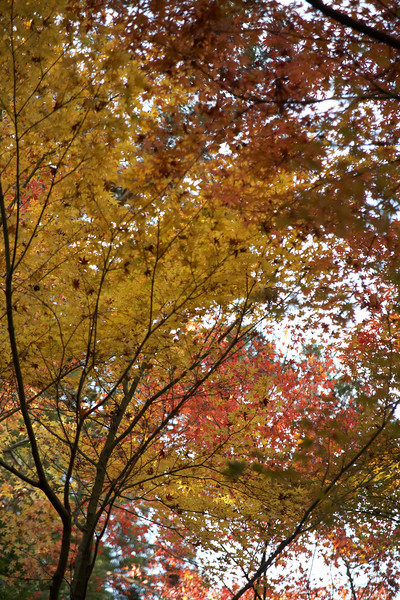 More fall colors.