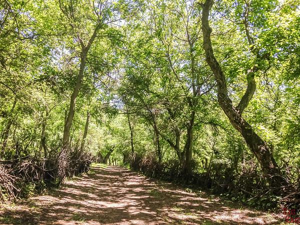 Arslanbob, Kyrgyzstan: walnut forest 1