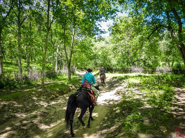 Arslanbob, Kyrgyzstan: walnut forest 4