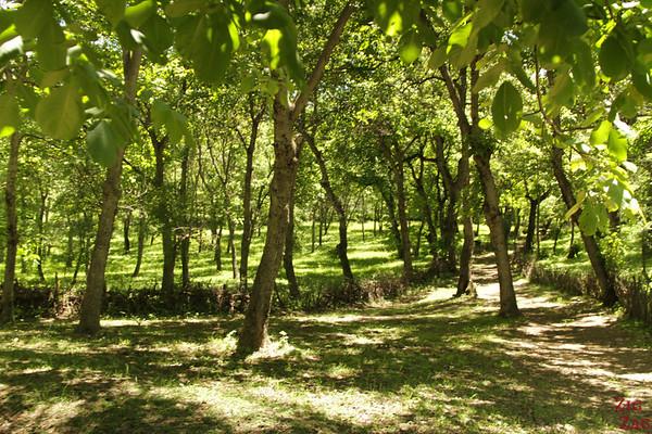 Arslanbob, Kyrgyzstan: walnut forest 2