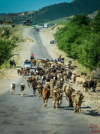 Transhumance on side roads, Kyrgyzstan 5