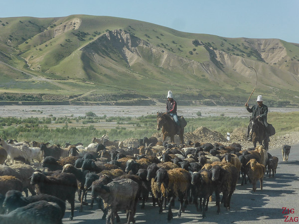 Transhumance on main roads, Kyrgyzstan 4