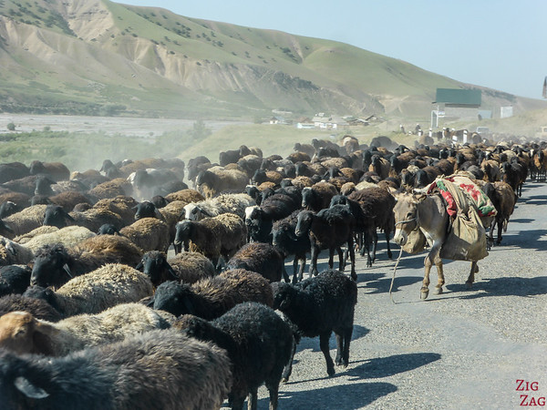 Transhumance on main roads, Kyrgyzstan 2