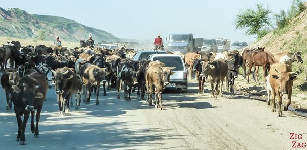 Transhumance on main roads, Kyrgyzstan 5