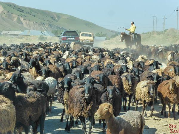 Transhumance on main roads, Kyrgyzstan 3