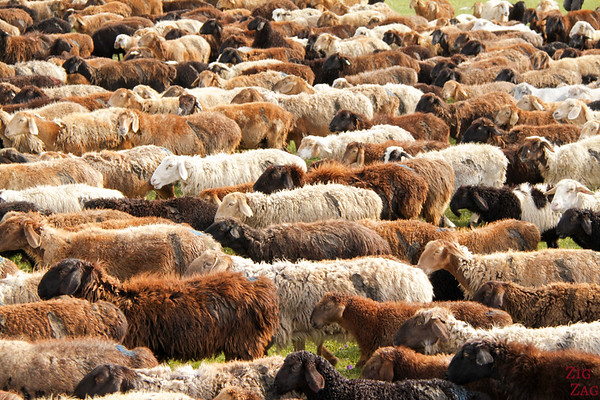 Transhumance at high altitude, Kyrgyzstan 2