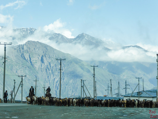 Transhumance on main roads, Kyrgyzstan 6