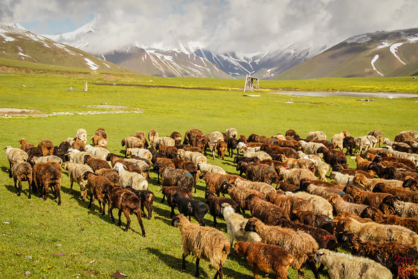 Transhumance at high altitude, Kyrgyzstan 3