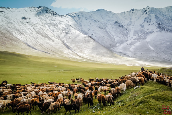 Transhumance at high altitude, Kyrgyzstan 1