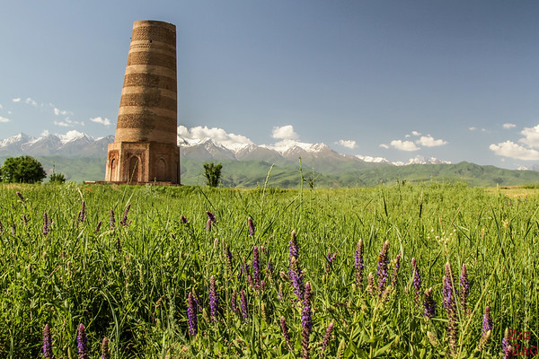 the Burana Tower with purple flowers Kyrgyzstan