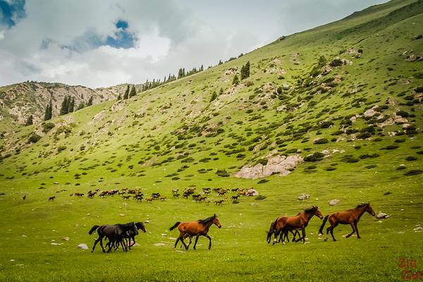Kyrgyz horses Altyn Arashan Kyrgyzstan