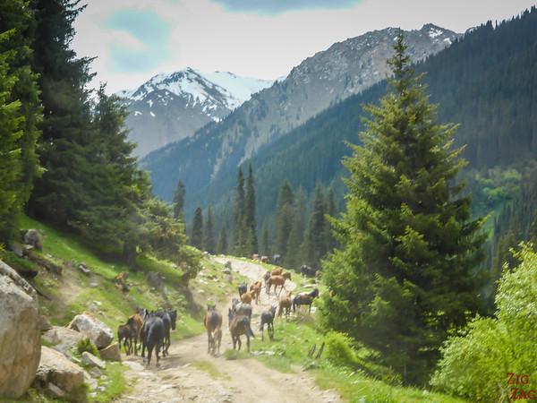horses road to valley Altyn Arashan Kyrgyzstan
