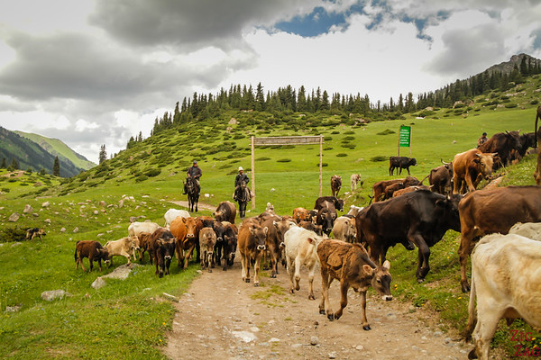 herders Altyn Arashan Kyrgyzstan