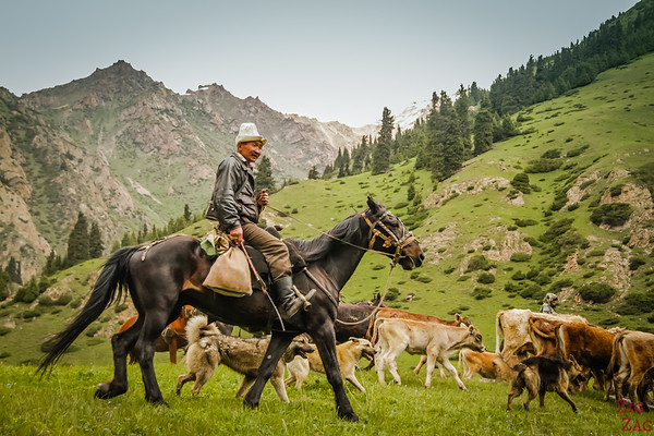 Nomad Kyrgyz and their herds 2