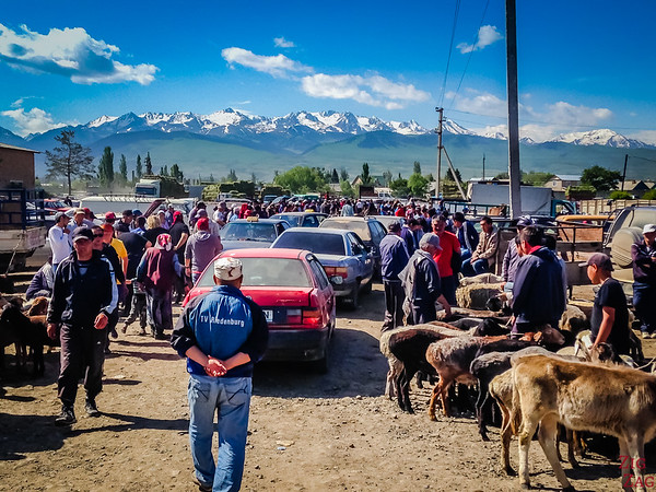Top 7 places to visit in Kyrgyzstan : Karakol animal market