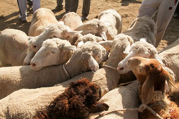 Karakol animal market, Kyrgyzstan 4