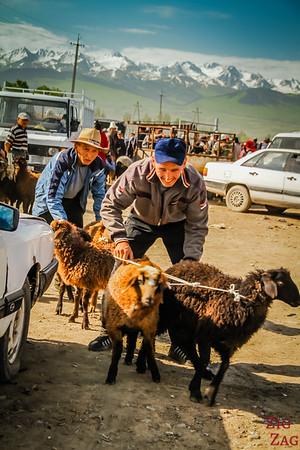 Karakol animal market, Kyrgyzstan 2