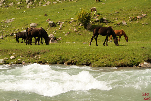 horses at the Valley of flowers, Kyrgzystan 2