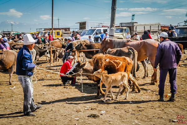Karakol animal market, Kyrgyzstan 8