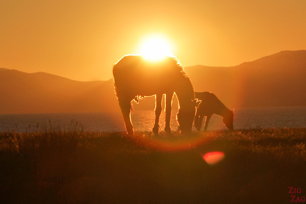 horses at Sunset,  Song Kul lake, Kyrgyzstan 3