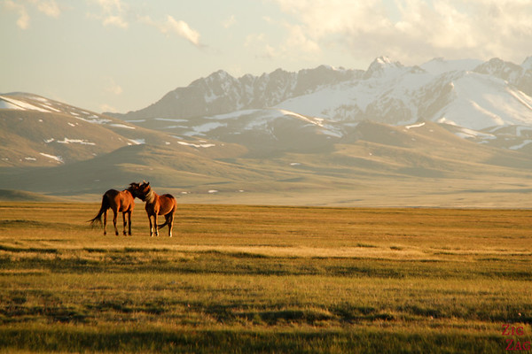 horses at Sunset,  Song Kul lake, Kyrgyzstan 1