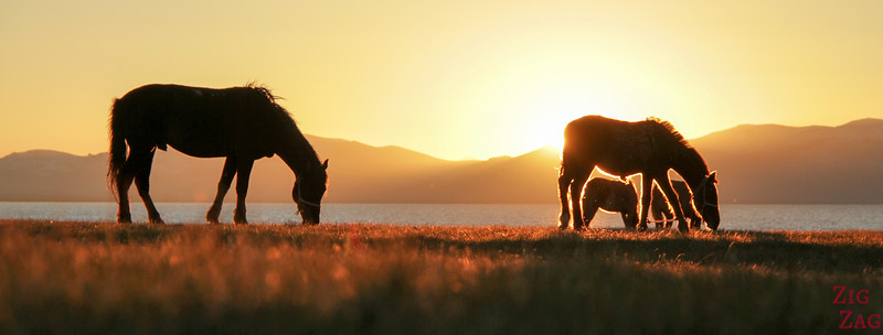 horses at Sunset,  Song Kul lake, Kyrgyzstan 4