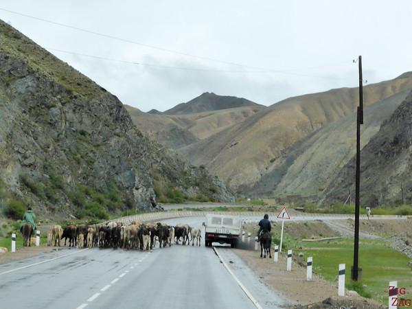 Transhumance on side roads, Kyrgyzstan 1