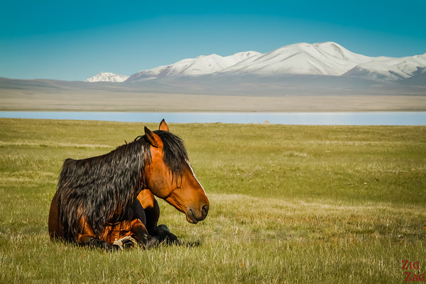 Horse at summer pasture, Song Kul Lake, Kyrgzystan