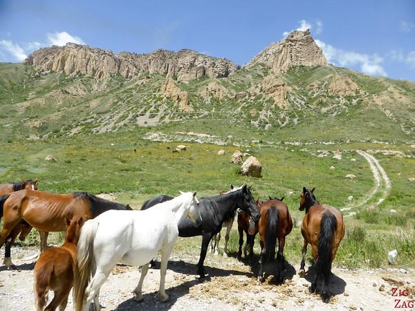 Transhumance on side roads, Kyrgyzstan 3