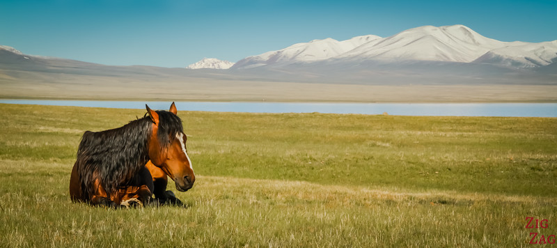quiet horse at  Song Kul lake, Kyrgyzstan