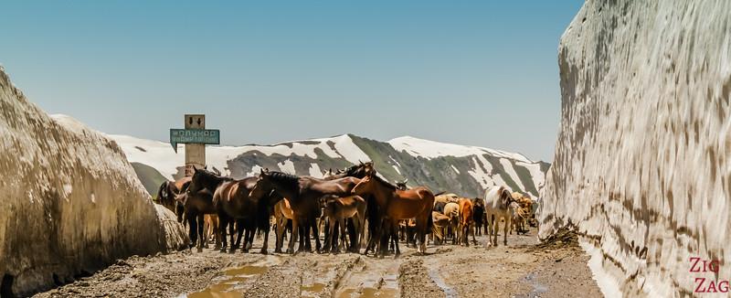 Meeting a herd at a mountain pass, Kyrgzystan 2
