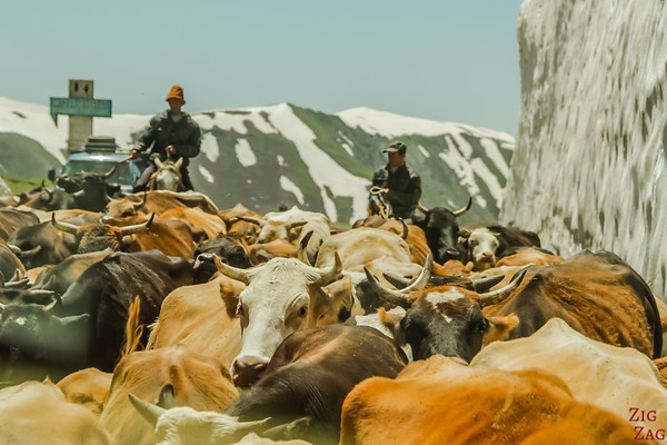 Transhumance at snowy mountain pass, Kyrgyzstan 1