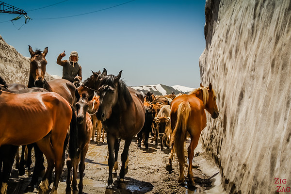 Meeting a herd at a mountain pass, Kyrgzystan 4