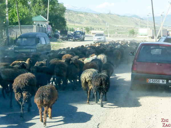 Transhumance on main roads, Kyrgyzstan 1
