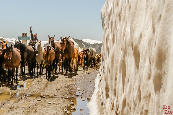 Meeting a herd at a mountain pass, Kyrgzystan 3