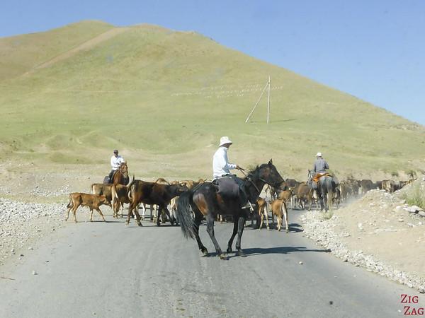 Transhumance on side roads, Kyrgyzstan 4