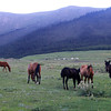 The Herd at Sundown