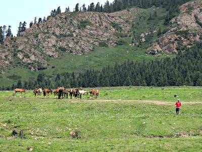 Horses Gathered