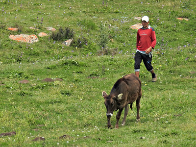 Herdsman with Calf