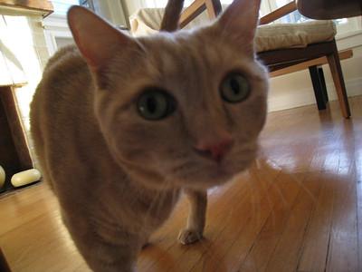 Horton is curious
