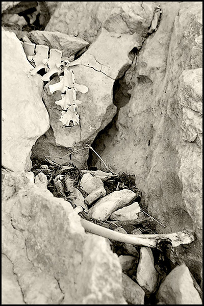 SKELETAL REMAINS AT THE ENTRANCE TO THE CAVE OF GOATS-DEVIL'S RIVER