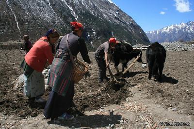 Trek_019_Sindum_potato planting