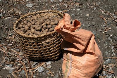 Trek_018_Sindum_potato planting