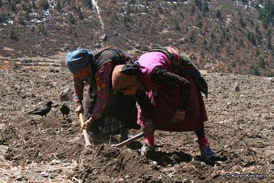 Trek_020_Sindum_potato planting