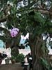 Luang Prabang Riverside Orchid
